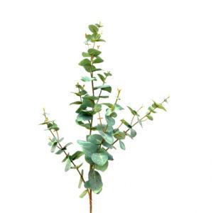 Rama de eucalyptus